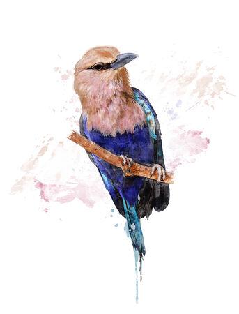 Watercolor Digital Painting Of Blue Bellied Roller Bird