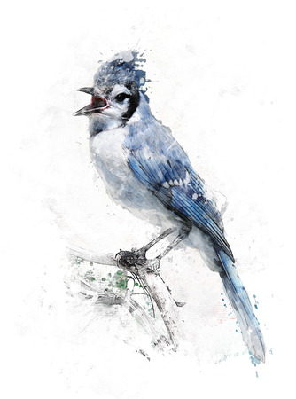 Watercolor Digital Painting Of Blue Jay Bird 版權商用圖片