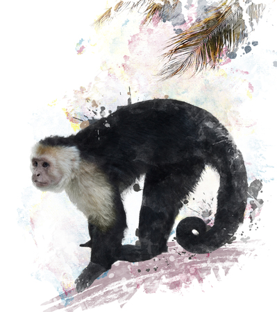 watercolour: Watercolor Digital Painting Of White Throated Capuchin Monkey