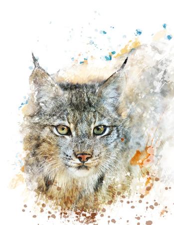 lince: Pintura Acuarela Digital De Canada Lynx Foto de archivo
