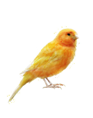 Watercolor Digital Painting Of Yellow Bird