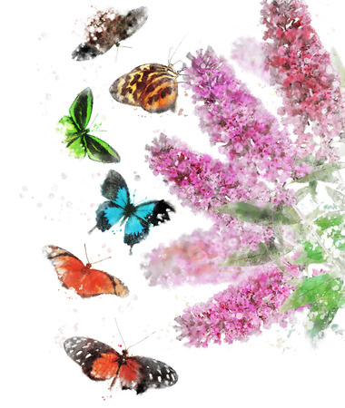 Watercolor Digital Painting Of Buddleja (Butterfly Bush) With Butterflies Zdjęcie Seryjne