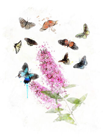 Watercolor Digital Painting Of Buddleja (Butterfly Bush) With Butterflies Stock Photo