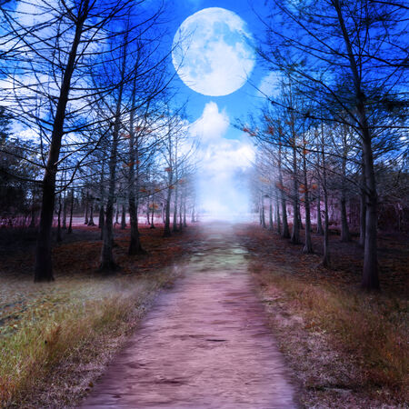 moon: Full Moon And Woods.Digital Painting Stock Photo