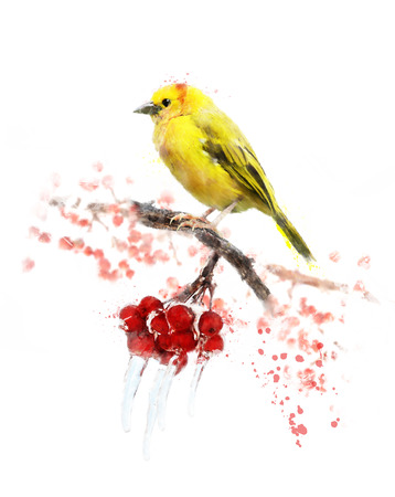 Watercolor Digital Painting Of Yellow Bird And Berries