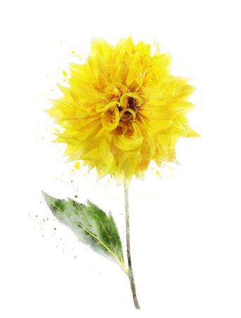 dalia: Pintura Acuarela Digital De Dahlia amarillo Foto de archivo