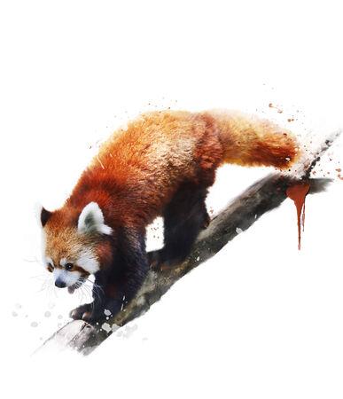 watercolour: Watercolor Digital Painting Of Red Panda Stock Photo
