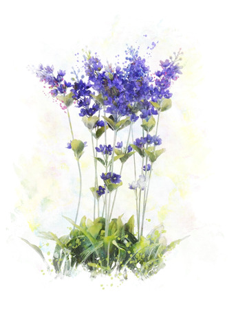 라벤더 꽃의 수채화 디지털 페인팅 스톡 콘텐츠