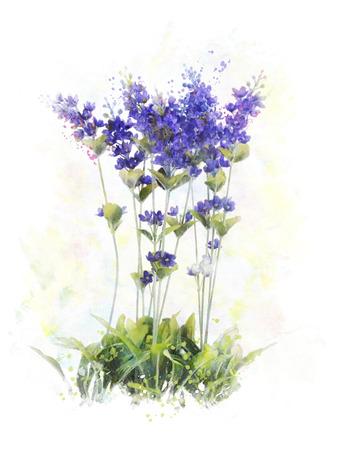 Watercolor Digital Painting Of Lavender Flowers Foto de archivo