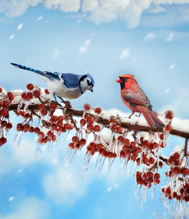 watercolour: Digital Painting Of Birds  In Winter
