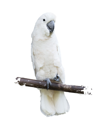 Digital Painting Of White Parrot