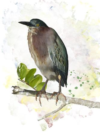 Digital Painting Of Green Heron Perching Imagens