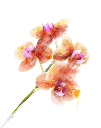 watercolour: Digital Painting Of Orchid Flower