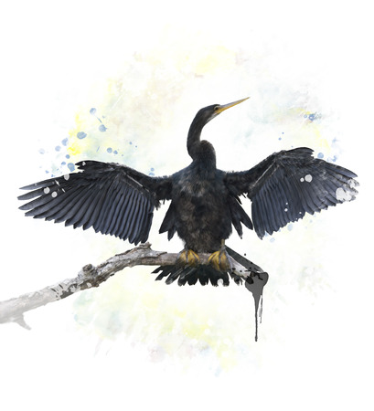 perching: Digital Painting Of Anhinga Bird Perching Stock Photo