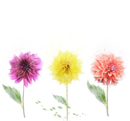 dahlia: Digital Painting Of Dahlia Flowers Stock Photo