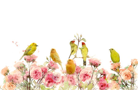 pink bushes: Digital Painting Of Rose Bushes And Yellow Birds