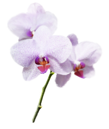 Digital Painting Of Purple Orchid Flower Reklamní fotografie - 35001763