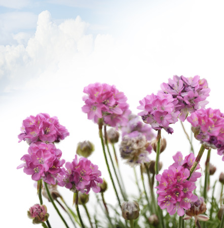 purple flowers: Digital Painting Of Purple Flowers