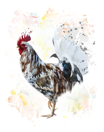 watercolour: Digital Painting Of Colorful Rooster