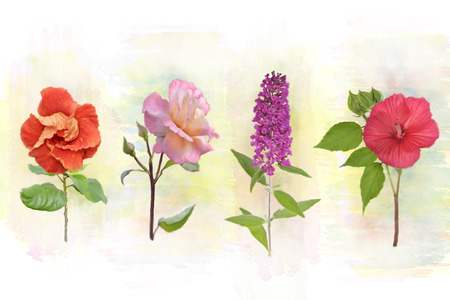 Digital Watercolor Painting Of Flower Background Stock Photo