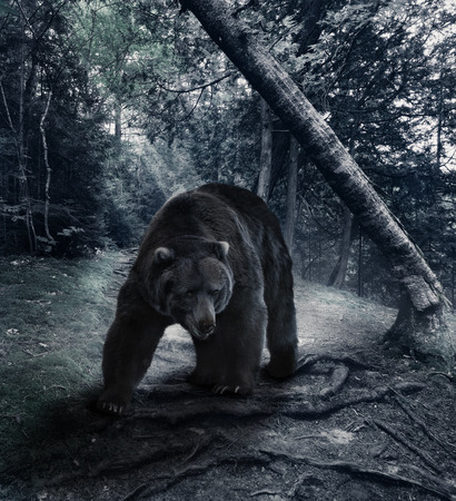 dark brown: Grizzly Bear Walking In The Forest
