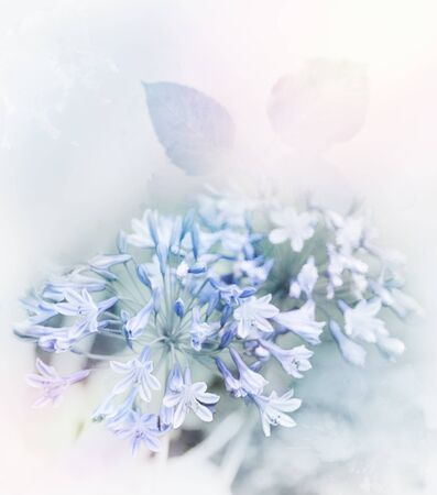 Digital Painting Of Blue Flowers.Soft Focus