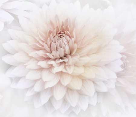soft focus: Dalia rosada de la acuarela, Enfoque Suave Foto de archivo