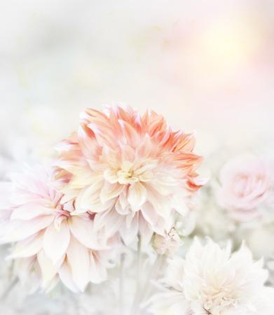 dahlia: Digital Painting Of Dahlia Flowers.Soft Focus