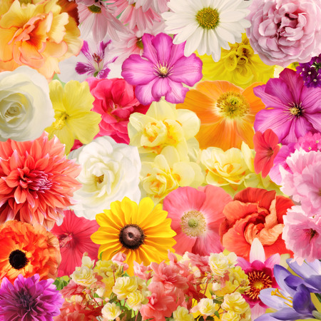 plant design: Digital Painting Of Colorful Floral Background Stock Photo