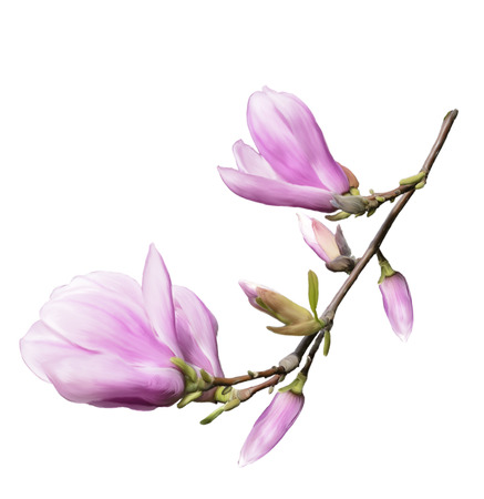 Digital Painting Of Magnolia Flowers Isolated On White Background