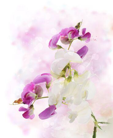 Digital Painting Of  Sweet Pea Flowers Reklamní fotografie