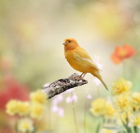Yellow Bird Perched In The Garden 版權商用圖片 - 37427590