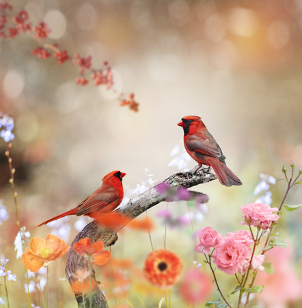 Northern Cardinals Perched In The Garden