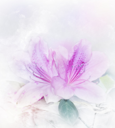 Digital Painting Of Pink Azalea Flowers.Soft Focus Stock Photo