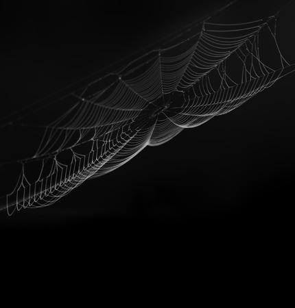 Spinneweb op zwarte achtergrond
