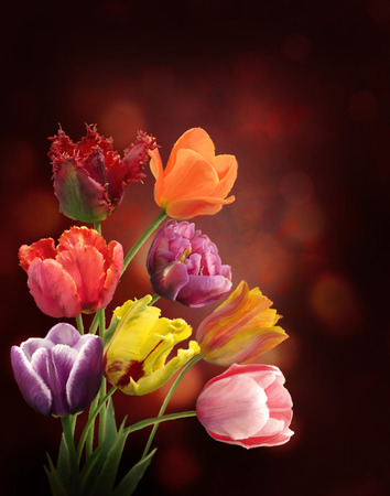Digital Painting Of  Tulip Flowers