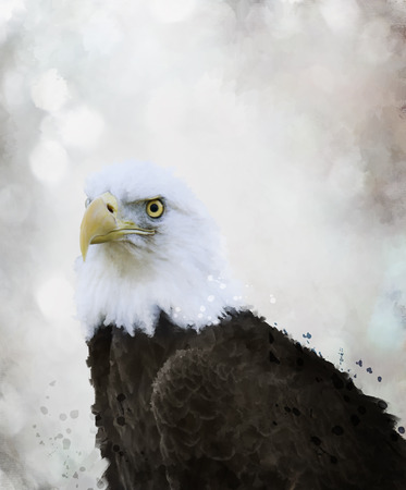 Digital Painting Of Bald Eagle Stock Photo