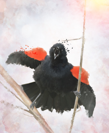 Digital painting Of Red Winged Blackbird Фото со стока