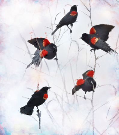 blackbird: Digital painting Of Red Winged Blackbirds Sitting On Branches Stock Photo