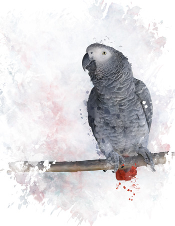african grey: Digital Painting Of African Grey Parrot