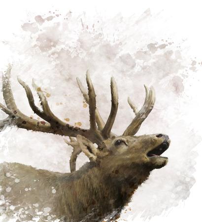 Digital Painting Of Bull Elk