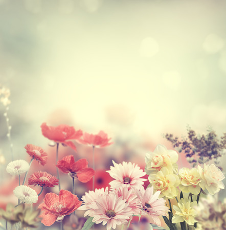 nature wallpaper: Variation Of Colorful Spring Flowers Stock Photo