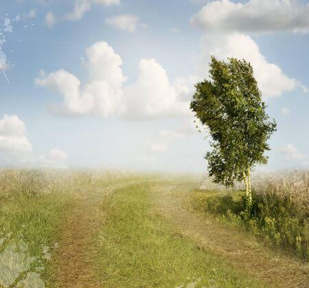 田舎道と白樺の木夏の風景
