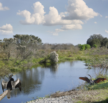 wetlands: Florida Wetlands Against Blue Sky