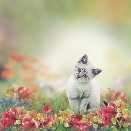 kitten: Cute White Kitten in Flowers