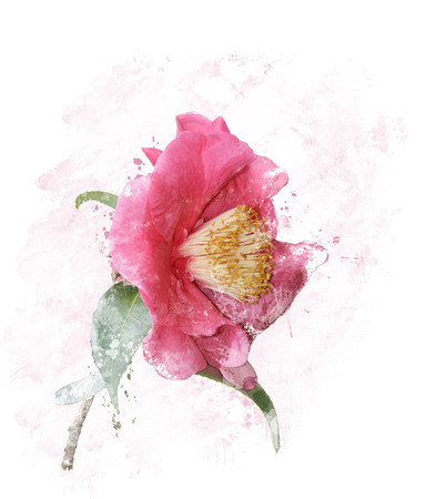 Digital Painting of Pink Rose