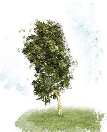 watercolour: Digital Painting of Birch Tree on White Background
