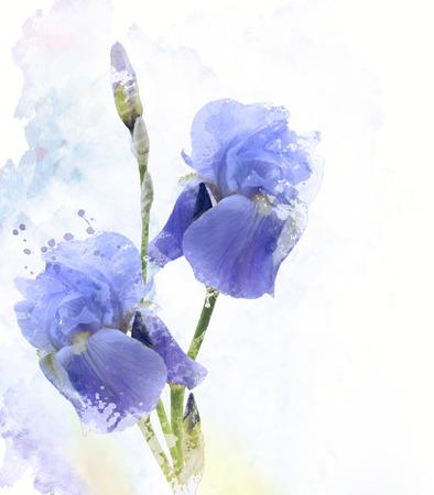 Digital Painting of Iris Flowers