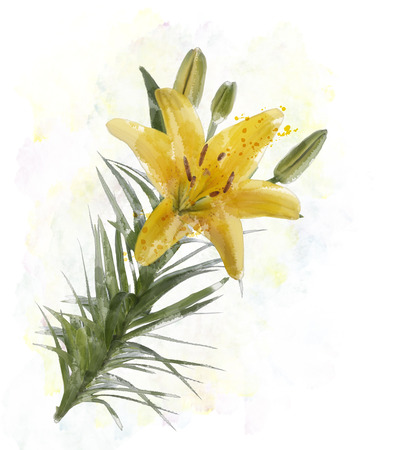 lily buds: Digital Painting Of Yellow Lily Flowers