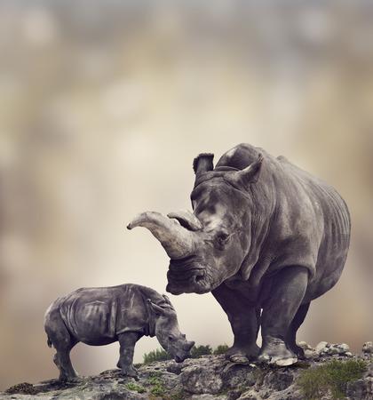 nashorn: Breitmaulnashorn: Erwachsener und Baby-